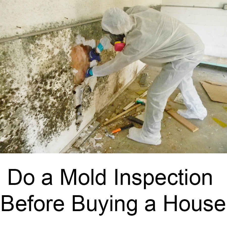 Do a mold inspection before buying a house local records for What to do before buying a home